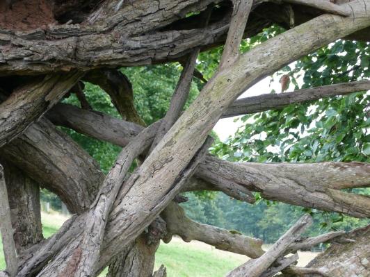Elm root sculpture